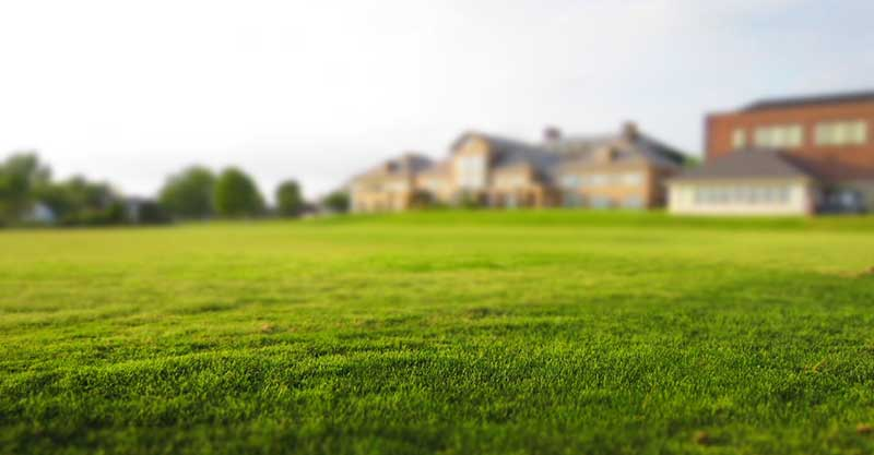Three Easy Steps to Overseeding Lawn in Spring