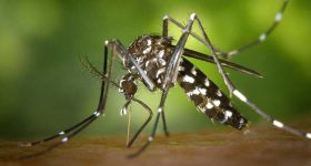 Three Easy Homemade Mosquitoes Repellent